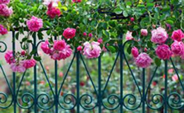 Mantenimiento de jardines. MOD 1